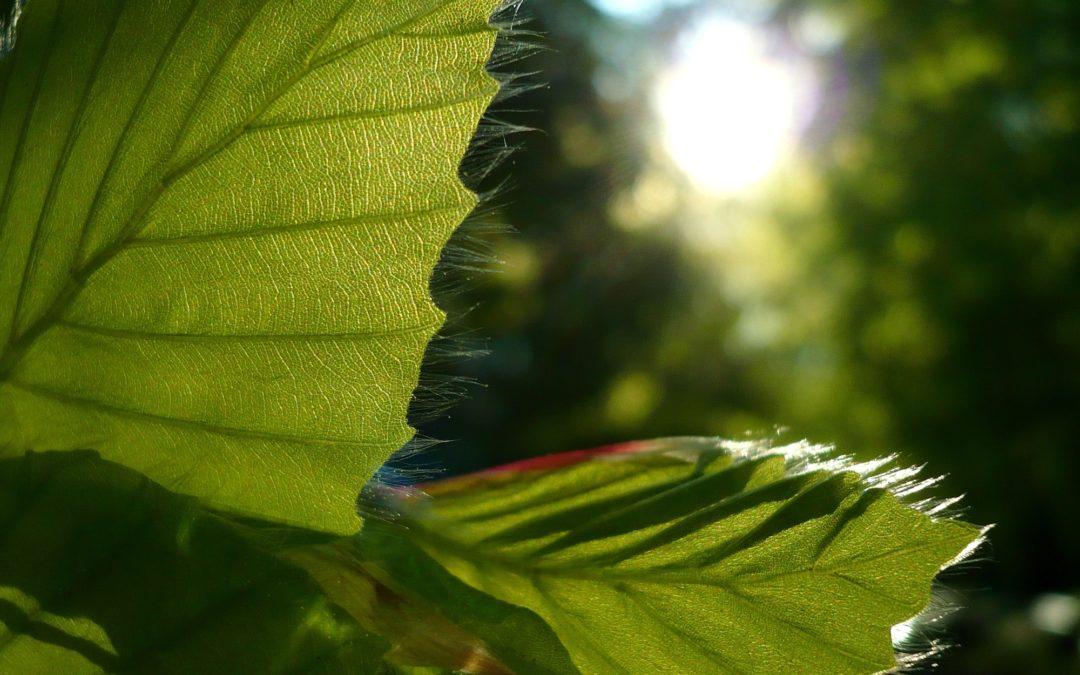 Et stærkt 2018 for træplantning