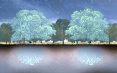 Hvad træer og skove kan i forhold til CO2 udledningen – gode links.