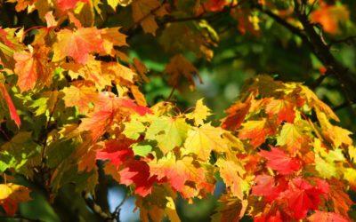 Økologisk vin – nu også med et CO2-venligt aftryk