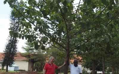 GROW|FOR|IT-plantninger i Uganda er nu i gang