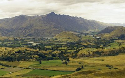 New Zealand's government launches 1 billion trees programme