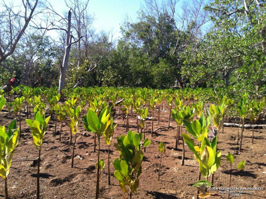 "GROW-FOR-IT har opnået ""Sapling-partner"" status hos Eden Reforestation Projects"