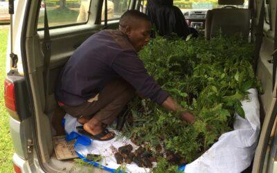 GROW|FOR|IT har allerede udsolgt i Uganda for 2019, nu planter vi mangroveskov i Madagaskar