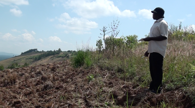 Status på træplantning i Uganda, august 2019