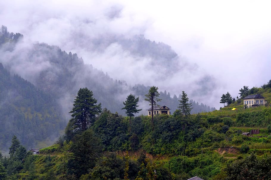 Status på træplantning i Nepal 2019
