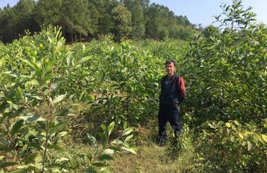 Modeltræplantning i Vietnam er nu færdig