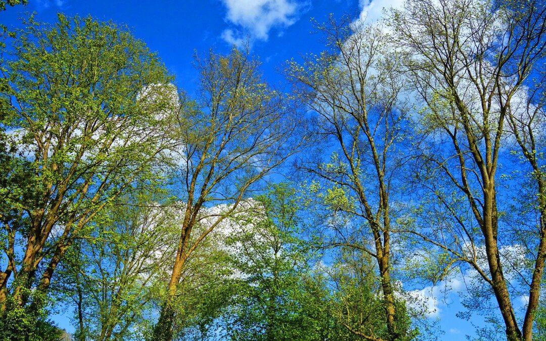 Dekorativt billede af skoven i foråret