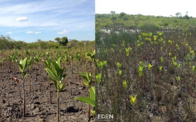 "Grow For It bliver ""Grove Partner"" hos Eden Reforestation Projects!"