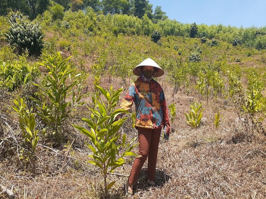 Vietnam – nye træplantninger i 2020