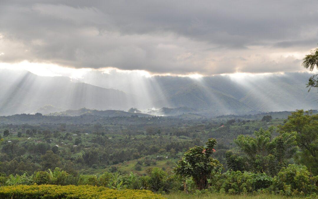 Ny skov svarende til 94 hektar i Uganda i 2020-2021