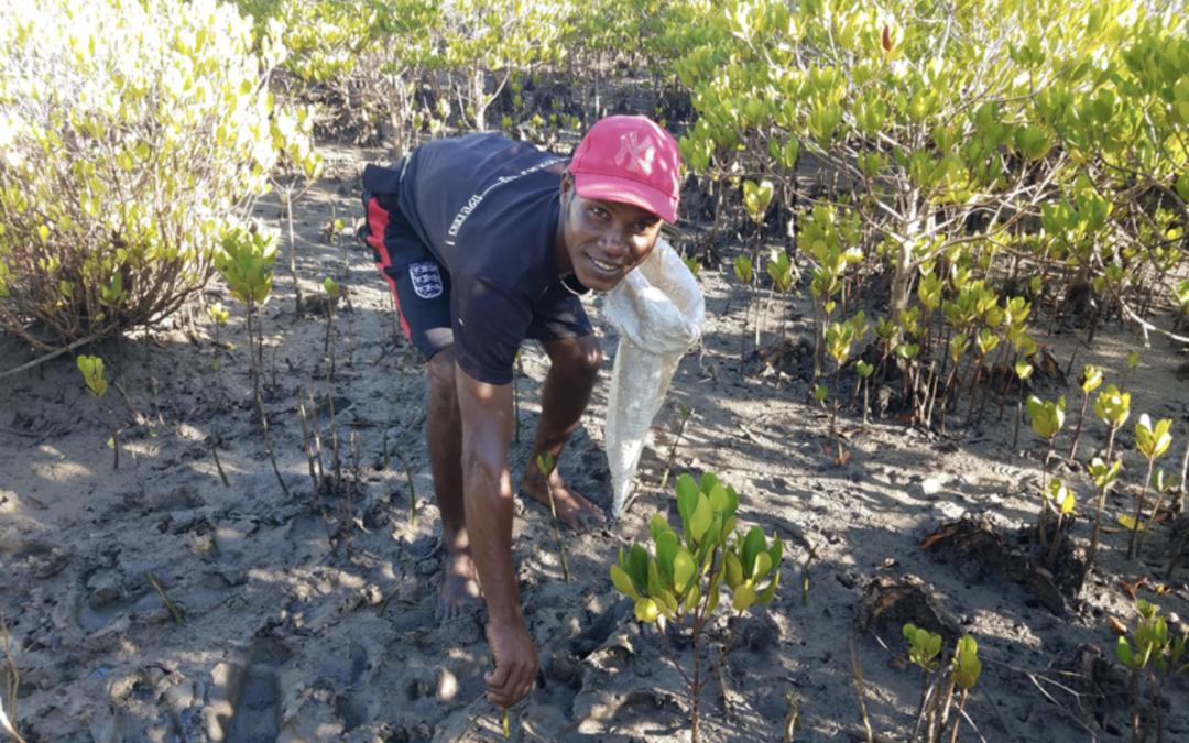 Vi har plantet 860.200 mangrovetræer i Madagascar det seneste år