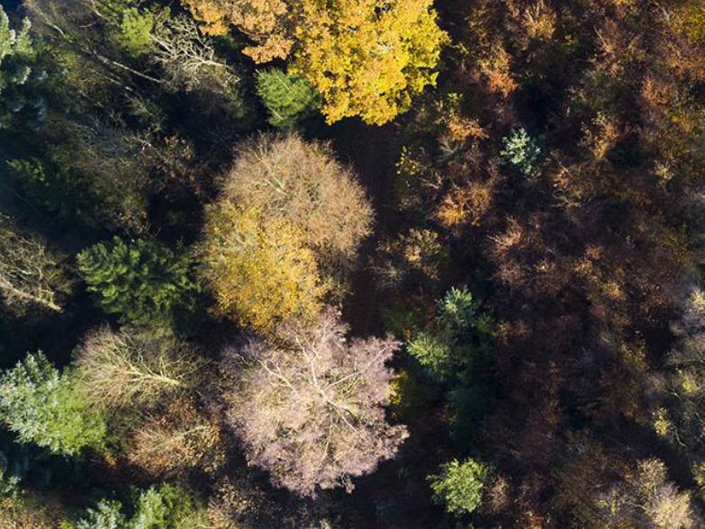 Nyt samarbejde med Hedeselskabet om træplantning på marginal landbrugsjord i Baltikum