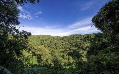 Aftaler på plads for 94 hektar skov i Uganda