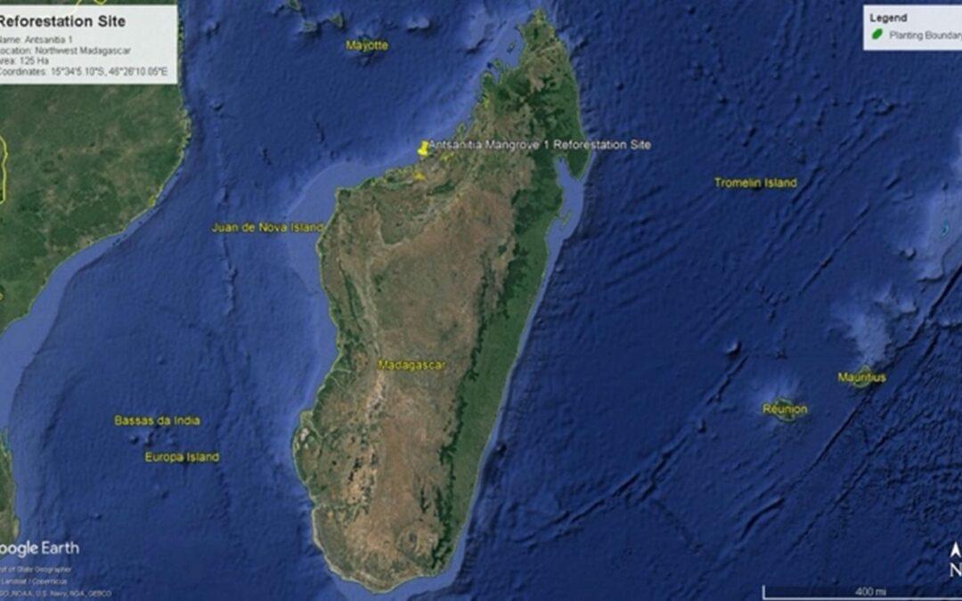 Opdatering om mangroveplantning fra Madacascar
